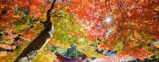 福壽山賞楓趣+苗栗杭菊+合歡山夕彩◎11/16(六)~11/17(日)