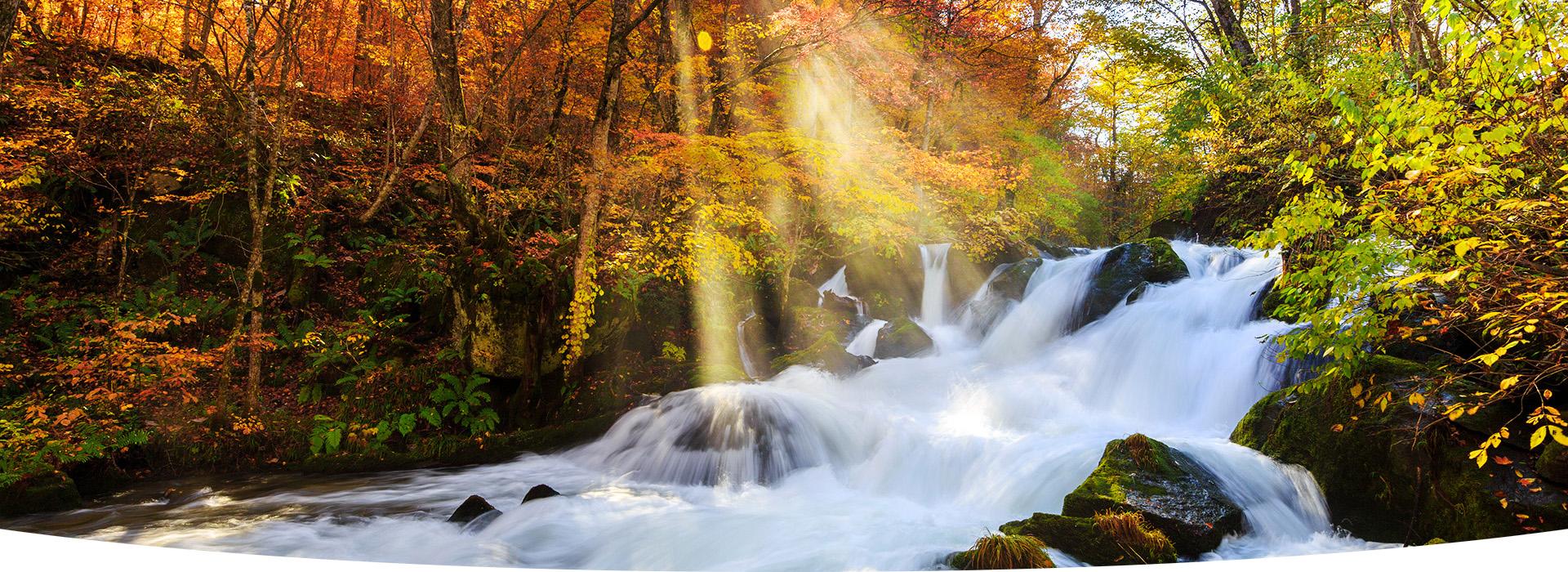 秋季賞紅葉絕美溪流
