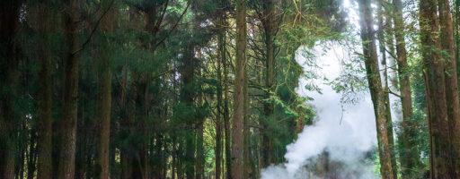 阿里山櫻花季:蒸汽火車&鐵道銀河&木棉花夕陽◎3/23(二)~3/24(三)【爆肝團】
